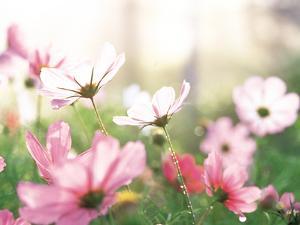 Pink Flowers in Meadow