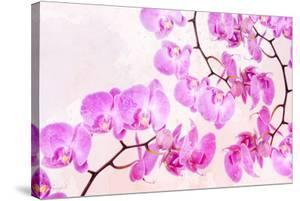 Pink Orchid I