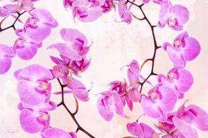 Pink Orchid II