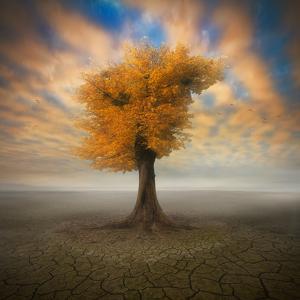 Lonesome by Piotr Krol