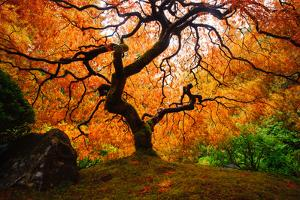 Maple Tree by Piriya Photography