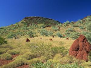 Mount Bruce and Termite Mounds, Karijini National Park, Pilbara, Western Australia, Australia by Pitamitz Sergio