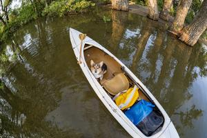 Corgi Dog in a Decked Expedition Canoe on a Lake in Colorado, a Distorted Wide Angle Fisheye Lens P by PixelsAway
