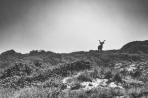 Elk by Pixie Pics