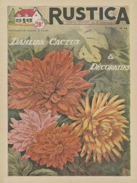 Plantez des Decoratifs