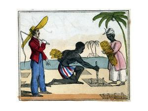 Planting, 1826