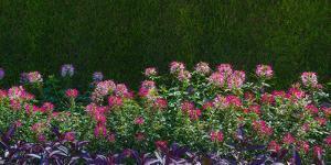 Plants at a garden, Niagara Parks School Of Horticulture, Niagara Falls, Ontario, Canada