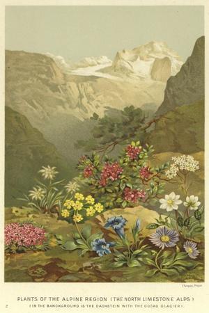 https://imgc.allpostersimages.com/img/posters/plants-of-the-alpine-region-the-north-limestone-alps_u-L-PPT75J0.jpg?artPerspective=n