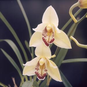 Plants, Orchid
