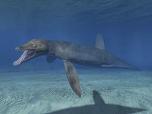Pliosaurus Kevani, Late Jurassic of England