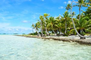Coconut Palms on A Pacific Island by pljvv