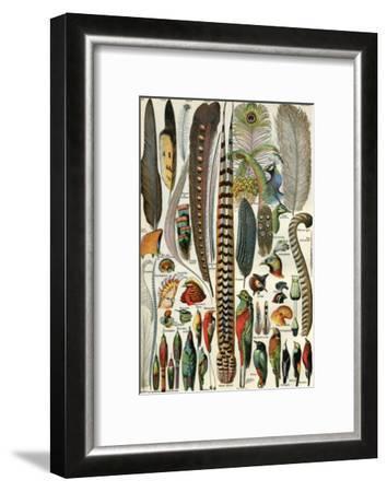 Plumes--Framed Art Print