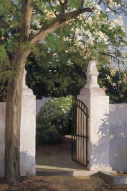 Acacia by Poch Romeu