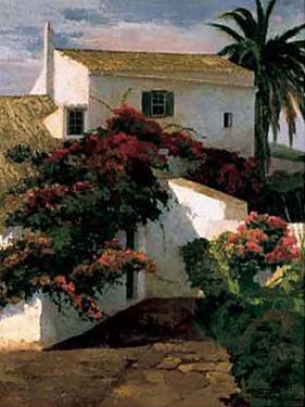 Courtyard Blossoms by Poch Romeu