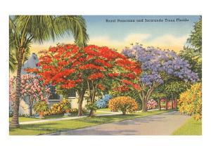 Poinciana and Jacaranda Trees