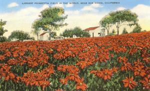 Poinsettia Field, Carlsbad, San Diego County, California