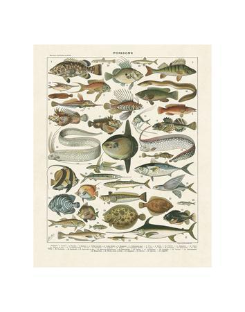 https://imgc.allpostersimages.com/img/posters/poissons-i_u-L-F8IKL60.jpg?p=0