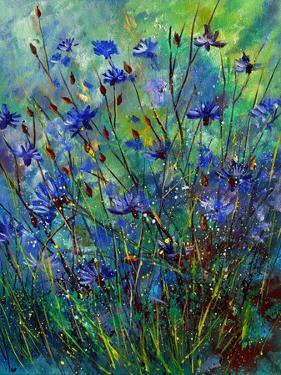 Cornflowers by Pol Ledent