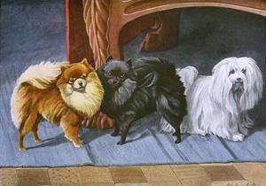 Pomeranians, Maltese Terrier