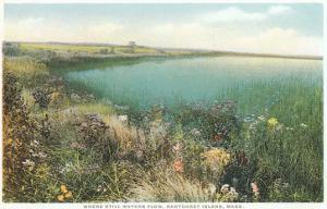 Pond and Wildflowers, Nantucket, Massachusetts