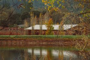 Pond House and Autumn Vineyard, Calistoga Napa Valley