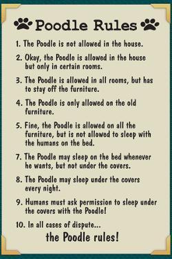 Poodle House Rules Humor