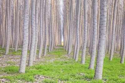 https://imgc.allpostersimages.com/img/posters/poplar-forest_u-L-Q1CAVNS0.jpg?artPerspective=n