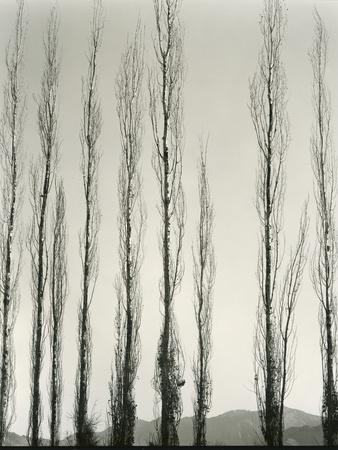 https://imgc.allpostersimages.com/img/posters/poplars-saline-valley-california-1954_u-L-Q1G6JFZ0.jpg?p=0