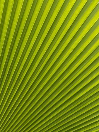 Palm Leaf, Botanical Gardens, Georgetown, Penang, Malaysia, Southeast Asia