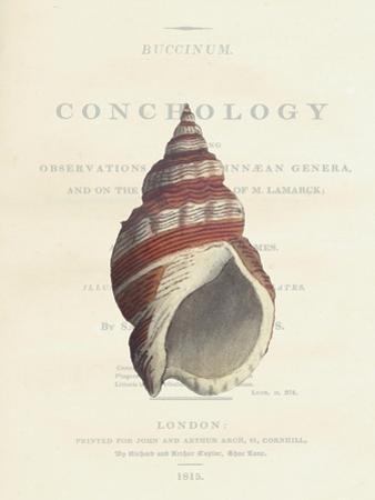 Conchology Buccinum by Porter Design