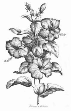 Crimson Hibiscus by Porter Design