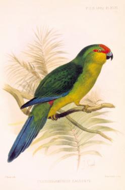 Joseph Smit Parrots Parrot Plate 46 by Porter Design