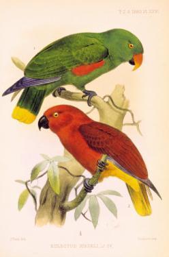 Joseph Smit Parrots Plate 26 by Porter Design