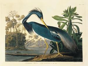 Louisiana Heron Plate 217 by Porter Design