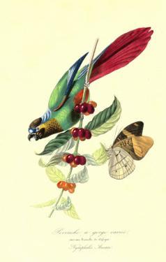 Parakeeto n CoffeeBush by Porter Design