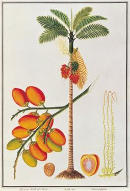 Penang Betle Nut Tree by Porter Design