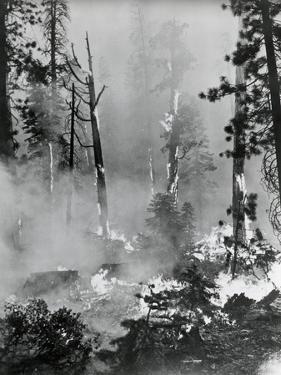 Portrait of A Raging Forrest Fire