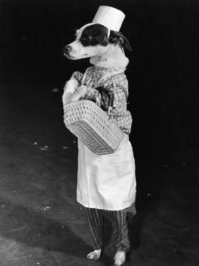 Portrait of Dressed- up Dog
