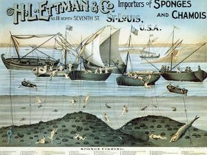 Poster Advertising 'H.L. Ettman and Co., Importers of Sponges and Chamois', 1897