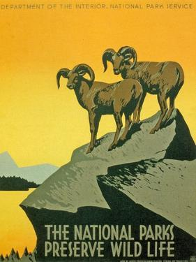 Poster Promoting the Biodiversity of National Parks, 1937