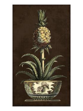 Potted Pineapple II
