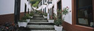 Potted Plants Along a Staircase, Sao Vicente, Madeira, Portugal