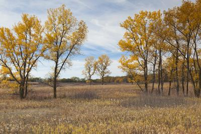 https://imgc.allpostersimages.com/img/posters/prairie-grassland-beatrice-nebraska-usa_u-L-PN6TJE0.jpg?p=0