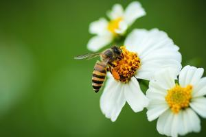 Flower Blossom And Bee by prajit48