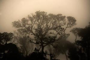 A Morning Mist in the Rainforest of Kerala by Prasenjeet Yadav