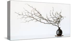 Vase And Branch by Prbimages