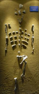 Prehistory, Paleolithic, Lucy Skeleton, Reproduction