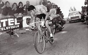 Merckx Dominates by Presse 'E Sports