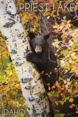 https://imgc.allpostersimages.com/img/posters/priest-lake-idaho-bear-cub-in-tree_u-L-Q1GQOM20.jpg?p=0