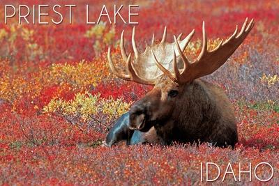 https://imgc.allpostersimages.com/img/posters/priest-lake-idaho-bull-moose-in-flowers_u-L-Q1GQOMK0.jpg?p=0